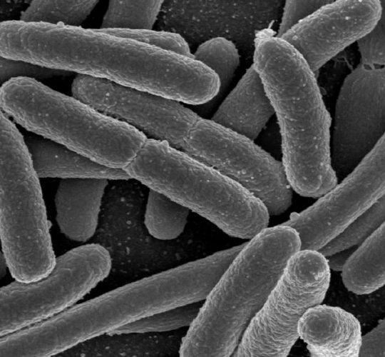 vi khuẩn ecoli gây viêm đường tiết niệu ở trẻ em